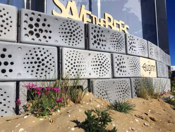 Buginn bijenhotel betonmuur